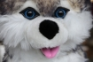 Husky als souvenir