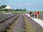 Puur op reis: Lavendelvelden