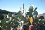 bloemen, planten en een lekker sapje op gran canaria