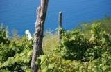 Wijngaard Italië