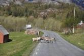 Dieren op de weg
