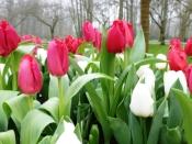 Puur op reis: tulpen Keukenhof