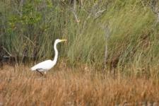 b_225_150_16777215_00_images_stories_Amerika_Florida_oostkust_vogeleverglades.jpg