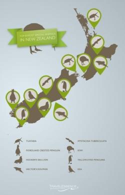 b_250_390_16777215_00_images_stories_bedrijfinbeeld_Top-8-meest-bijzondere-dieren-in-Nieuw-Zeeland-infographic.jpg