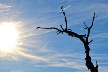 Dode boom in de zon