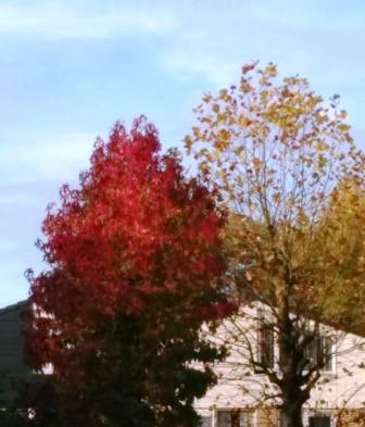 Puur op reis: herfstbomen